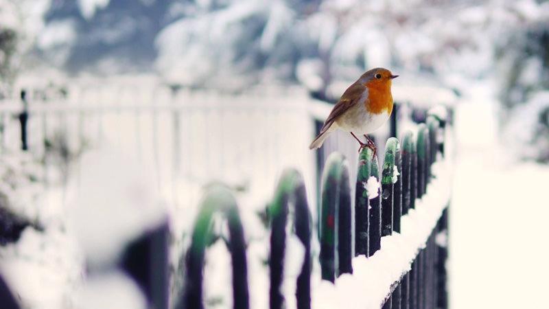 Снег на ограждении